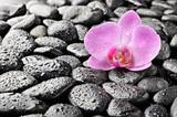 Fototapeta głaz - równowaga - Kwiat