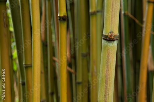 bamboo detail © kikkerdirk