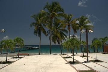 Palmiers sur le parvis du Diamant - Martinique