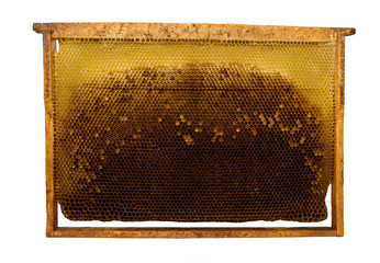 bee honeycombs