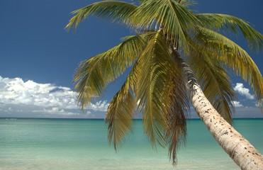 Vue palmier et horizon