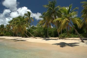 Palmiers sur les plages de Martinique