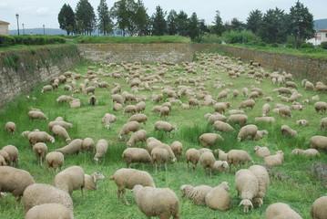 Pasto Urbano