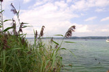 Wollmatinger Ried - Bodensee