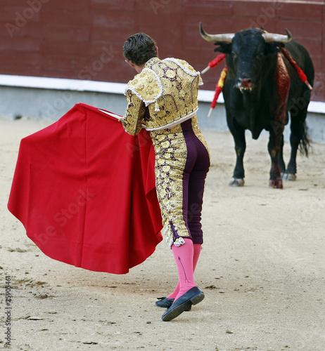 In de dag Stierenvechten toros