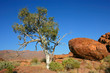 Tree and granite rocks, Namibia