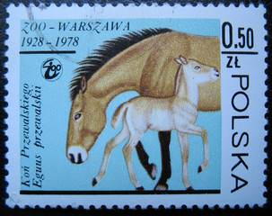POLAND - CIRCA 1978: Shows horse with a baby in zoo.