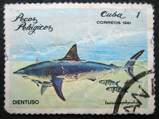 CUBA - CIRCA 1981 : Shows shark.