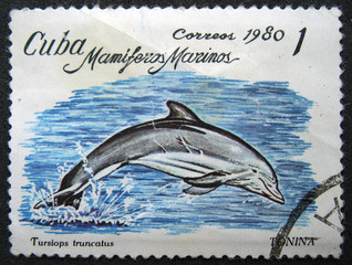CUBA - CIRCA 1980 : Shows sea mammal dolphin.