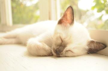 昼寝するネコ