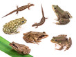 Amphibians and reptiles isolated on white background