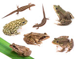 Amphibians and reptiles isolated on white background poster