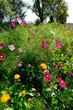 Blumenwiese am Straßenrand