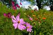 Blumenwiese bei Bötzingen