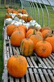 Selling Pumpkins