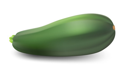 Zucchini isolated on white background. Vector illustration.