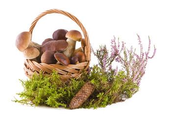 Boletus mushrooms in the basket