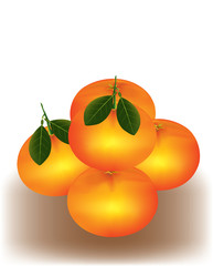 Mandarine orange on white background
