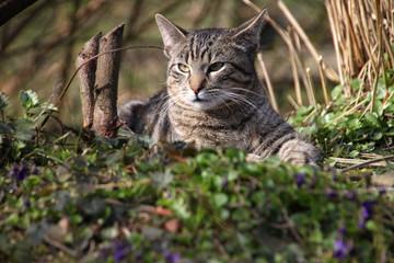 zufriedene Katze im Garten