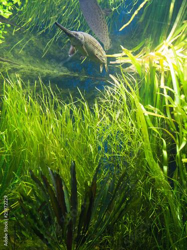 Aquarium et poisson d'eau douce
