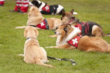 Rettungshunde