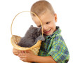 Little boy with gray kitty in wicker, isolated on white