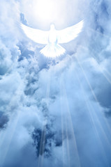 shining white dove descending from clouds