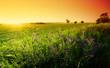 Barossa Field