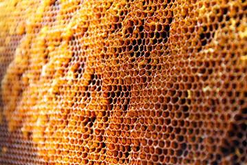 Rayons de cire d'abeille