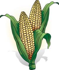 Pannocchia di Mais-Corn Cob-Vector
