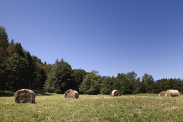 Hay bales on a field, trees background, clear blue sky