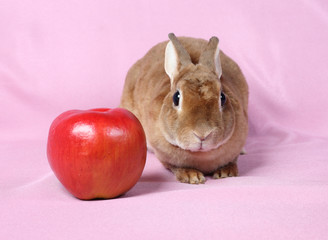 Small decorative rabbit. A symbol of New 2011.