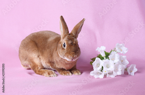 Small decorative rabbit. A symbol of New 2011.