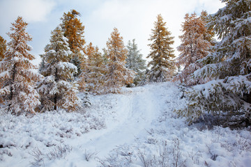 Altai road under snow