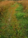 Winding path through the  field