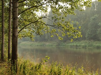 Foggy river bank and trees