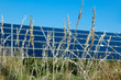 Grass before solar plant