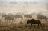 Fototapete Silhouette - Hintergrund - Säugetiere