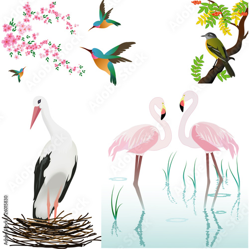 vector birds and flowers