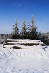 Winter forest nature