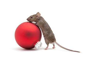 Christmas mouse and bauble isolated