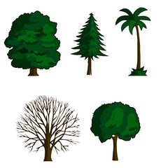 collection of vector illustration trees