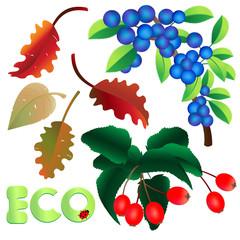 blätter - eco - früchte