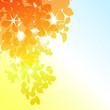roleta: Sunny autumn