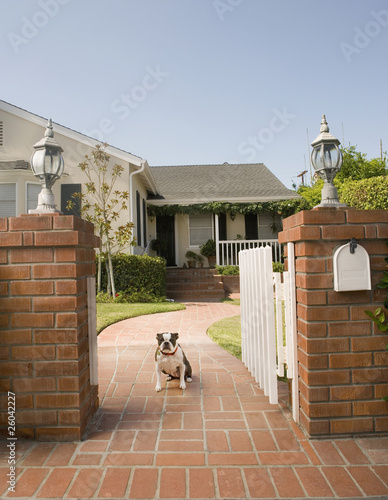 Dog sitting in open gate in front of house