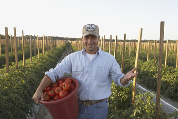 Hispanic male farm worker carrying bucket of tomatoes