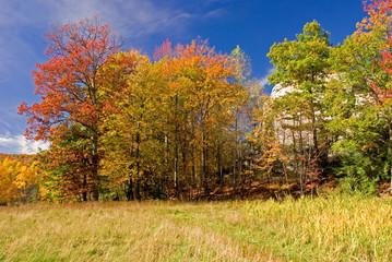 Scenic Autumn