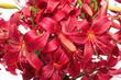 Quadro bouquet red lilies