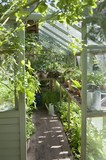 View into sunlit greenhouse