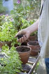 Gardener works in potting shed